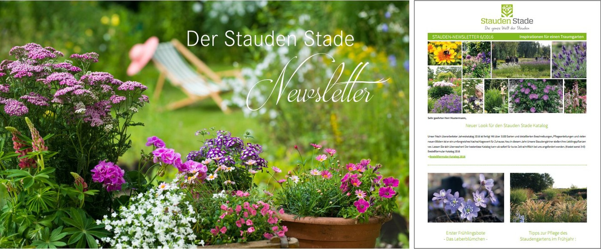 staudenkulturen stade newsletter. Black Bedroom Furniture Sets. Home Design Ideas